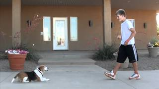 Therapeutic Boarding School Dog Program - Sojourn Academy, Utah
