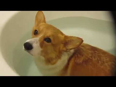 funny pets for dog #1 Animal 2018