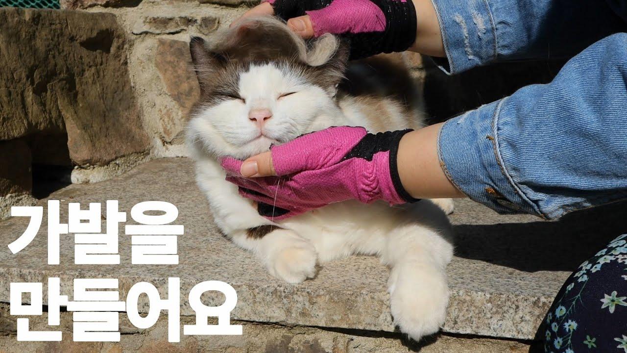 (ENG)여름털 벗고 겨울털 입은 산골 고양이들 빗질 해주기