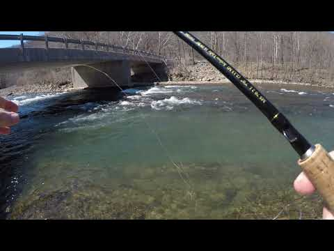 Trout Fishing The NorthFork In WV - 2019