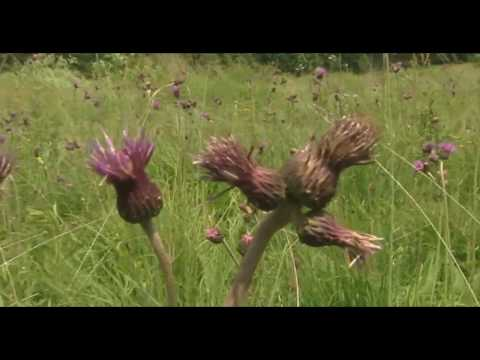 Biodiversity with a scythe