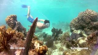 Key West Snorkeling at Dry Tortugas National Park