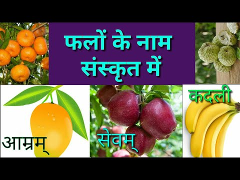 फलों के नाम संस्कृत में Fruits Name In Sanskrit/ Sanskrit Me Falo Ke Name/ Falo Ke Name Sanskrit Me