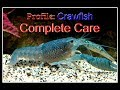 Profile: Complete Crawfish Care