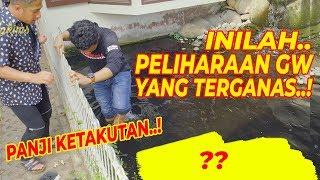 HEW4N_T3RG4NAS_DI_RUMAH_JOGLO..!_Bulus_Ivory_|_Feat._Panji_Petualang