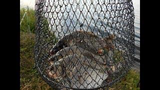 Отчёт о рыбалке Озеро Большой Сунгуль .
