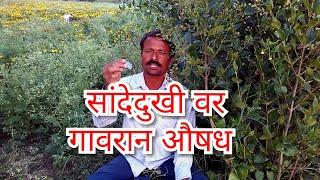 Sandhe dukhivar aaurvedik aushdha,Aamvat ,कंबर दुखी ,गुडघे दुखी,Ayurvedic treatment,आयुर्वेदीक औषध thumbnail