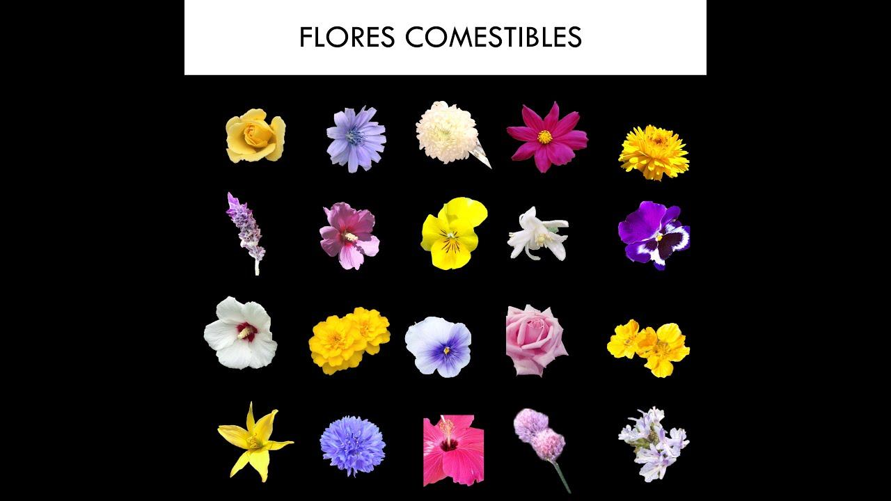 Flores Comestibles Petalos Que Se Comen Y Se Utilizan Para Cocinar