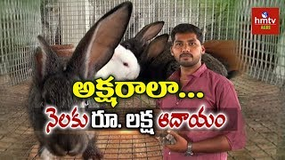 Rabbit Farming Young Farmer Sagar Reddy Rabbit Farming Success Story Hmtv Agri