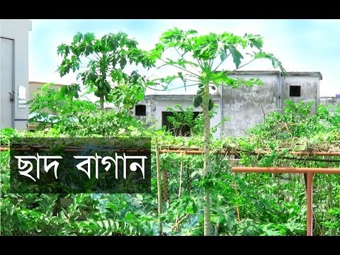 Rooftop Garden In Bangladesh Youtube