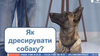 Як дресирувати собаку? | РАНОК НАДІЇ