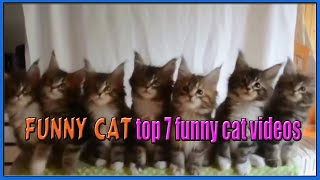 funny cat - top 7 funny cat videos   funny cat compilation  cute cats- 可愛的貓  - 逗貓