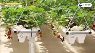 시설딸기-3.행잉베드 재배 시스템