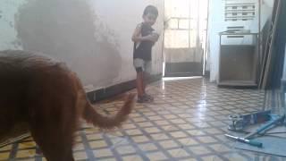 Dogo de burdeos : Sasha 7 meses