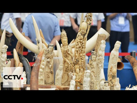 China Insight 03/26/2016 China's Illegal Ivory Trade
