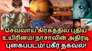 செவ்வாய் கிரகத்தில் புதிய உயிரினம்! நாசாவின் அதிரடி புகைப்படம்! Mars news tamil | Alien in Mars