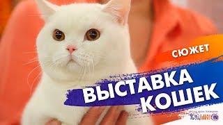 """Выставка кошек """"Осенний глаМУРР"""".  Сюжет Насти Лариной.  Телешко Иркутск."""