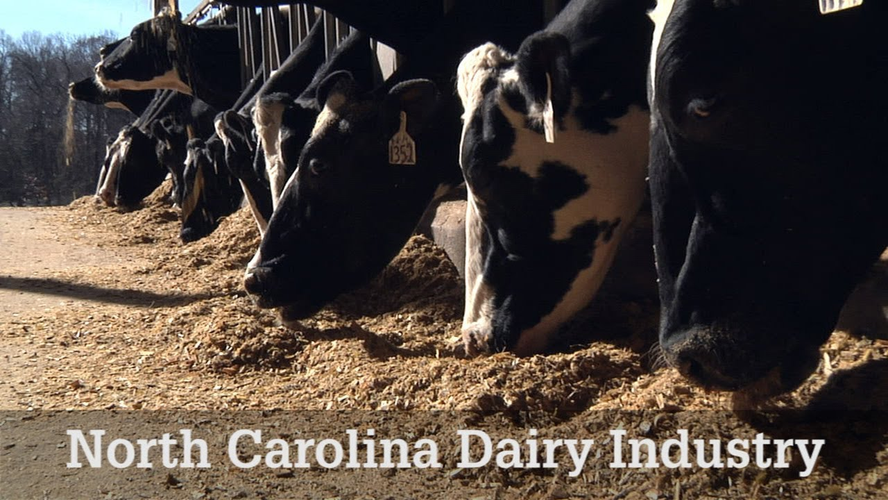 NC Dairy Industry (click to view video)