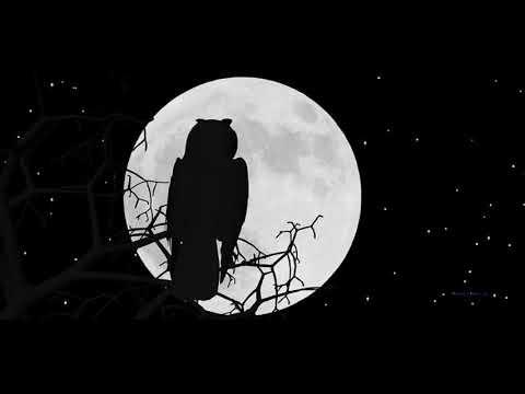 Yung B-Night Owl(Audio)