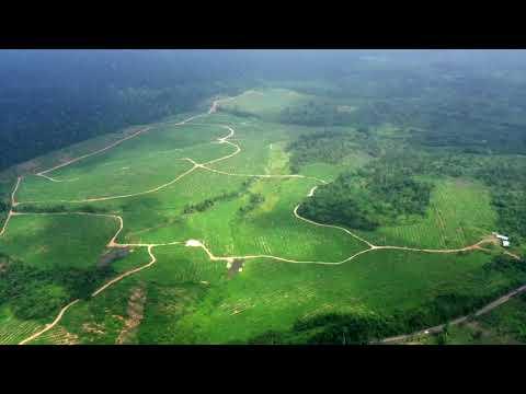 PLATINUM PLANTATIONS LTD., SAMIR GROUP , GHANA