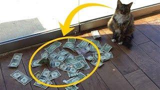 Download Кот каждый день приносил кучу денег! Когда люди узнали, где он их берет — у них отвисла челюсть! Mp3 and Videos