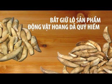 Vận chuyển móng vuốt sư tử, nanh báo châu Phi qua Tân Sơn Nhất