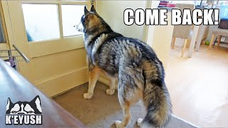 What My Husky Does When Home Alone!