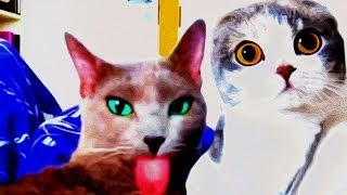 FUNNY ANIMALS COMPLILATION AUGUST 2014