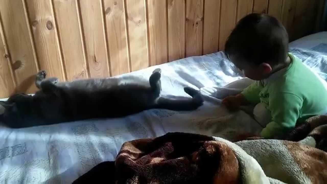 Что делать если кота укусили за хвост