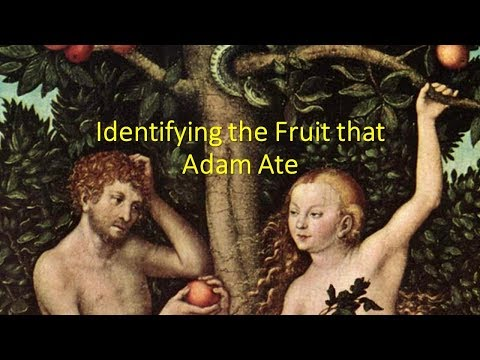 Identifying the Fruit that Adam Ate
