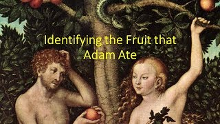 Identifying the Fruit that Adam Ate