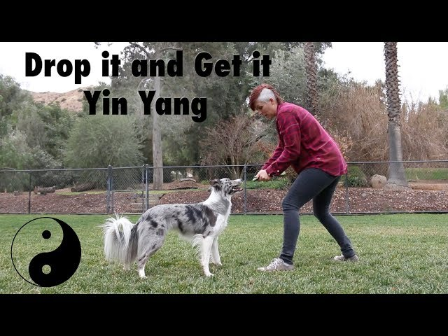 Proofing Drop it and Get it  - Dog Training by Kikopup