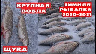 Астрахань Бузан Ахтуба Зимняя рыбалка 2021 Крупная ВОБЛА ОКУНИ ЩУКИ НА ЖЕРЛИЦЫ