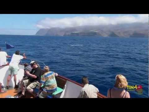Whale watching La Gomera: The summer of the Bryde's Whale