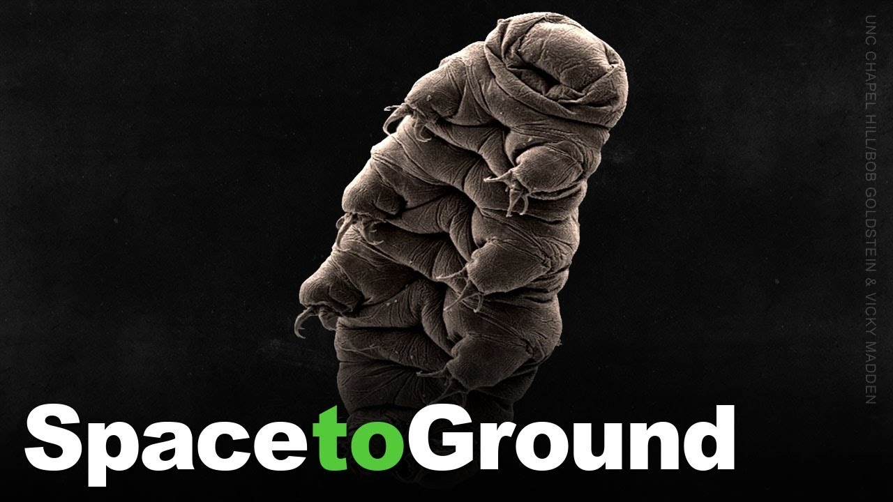 Space to Ground: Water Bears in Space: 07/16/2021 - NASA Johnson