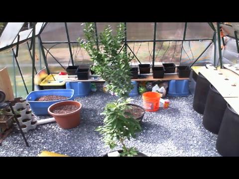 Greenhouse Live Stream #1
