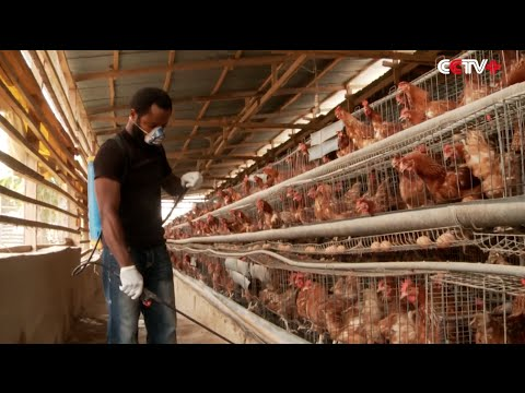 H5N1 Bird Flu Spreads to 18 States in Nigeria