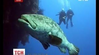 У Чорне море запливла невідома риба(UA - У Чорне море запливла невідома риба. Біля берегів Балаклави вона потрапила в тенета рибалок. Ті істоту..., 2013-05-03T18:07:17.000Z)