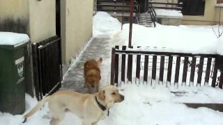 Mića I Maša Na Snegu