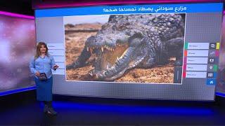 مزارع سوداني يصطاد تمساحا ضخما أرعب سكان ولاية نهر النيل والتهم شخصين!