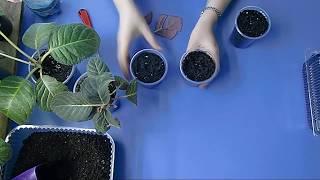 🌼РАЗМНОЖЕНИЕ ГЛОКСИНИИ ФРАГМЕНТАМИ ЛИСТА !!!🌼 🌱How to grow gloxinia part №28