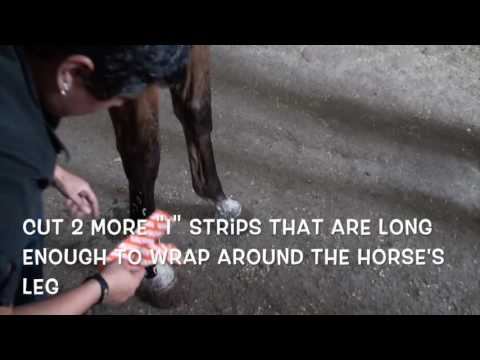 Equine Suspensory Ligament Support Taping