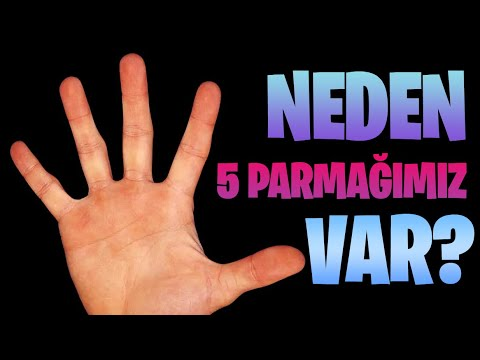 Homoloji: Neden Birçok Canlının Beş Parmağı Var?