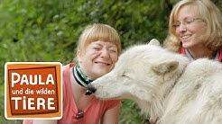 Wie böse ist der Wolf? (Doku) | Reportage für Kinder | Paula und die wilden Tiere