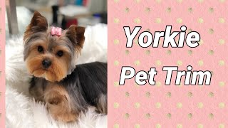 Yorkie Grooming And Trimming