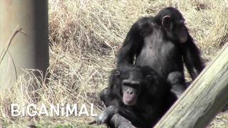 Download Amazing animal. Mystery of life Mp3 and Videos