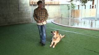 How To Raise A German Shepherd : Raising Your Dog