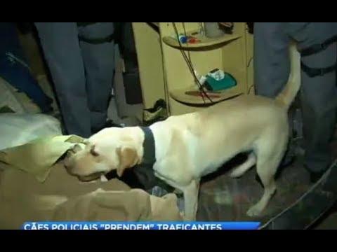 Canil da PM participa de operação contra o tráfico de drogas