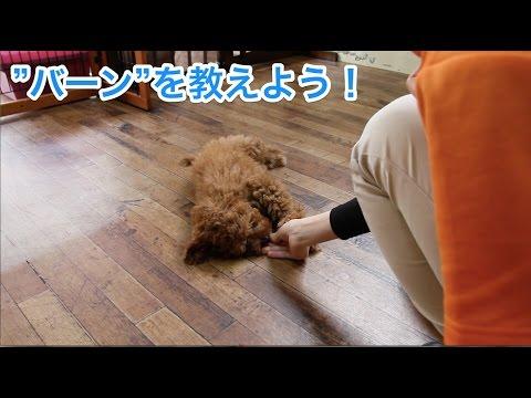 """""""バーン""""を教えよう!〜犬のしつけは大阪のsmart-dog〜"""