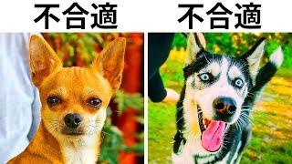什麼類型的狗適合有孩子的家庭? 有些在電影或者街頭出現的狗狗簡直就是...